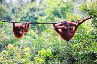 Čudovita Malezija: Kuala Lumpur in Borneo