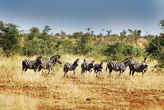 Potovanje po južni Afriki