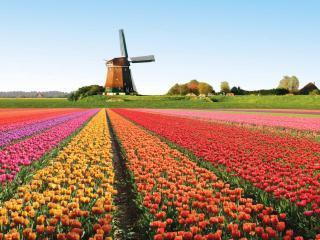 Cvetje Holandije