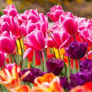 Sejem cvetja in vrtnega okrsja Ortogiardino