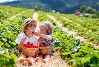 Hvar – otok sonca in plantaža jagod
