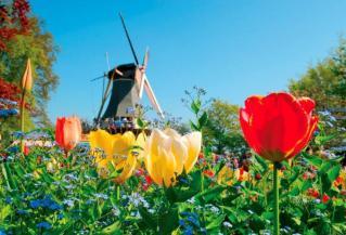 Cvetoča Nizozemska in evropski Bruselj